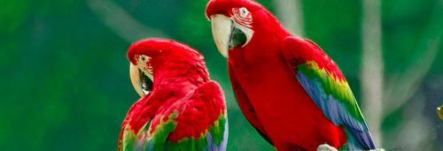 assurance perroquet, devis gratuit en ligne